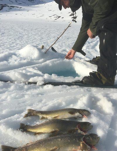Bilde av mann som fisker på isen og har fått flere fisk